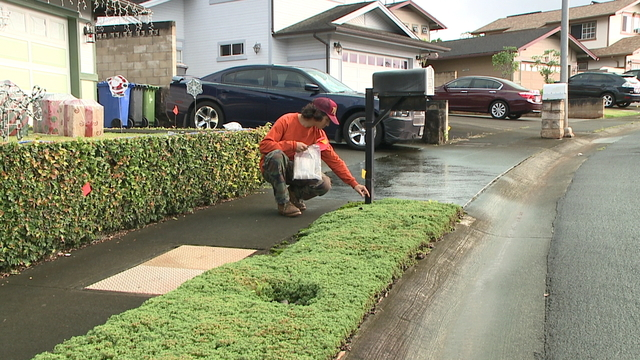 Crews return to Mililani Mauka to check for little fire ants