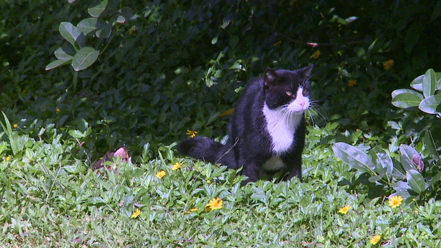 City moving to bring feral cat population under control