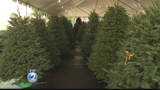 - Hawaii Will Likely See Fewer, More Expensive Christmas Trees This Year