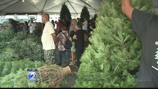 - Christmas Trees In High Demand Post-Thanksgiving