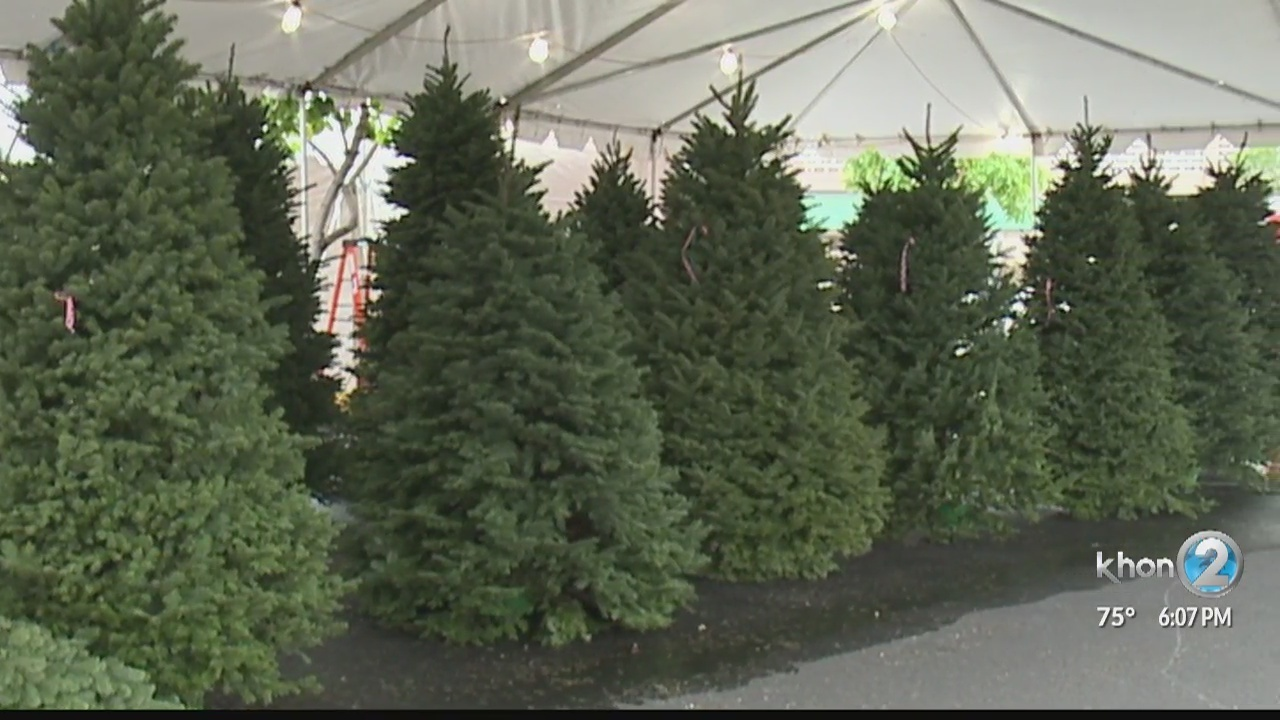 Christmas tree shortage will cost Hawaii residents