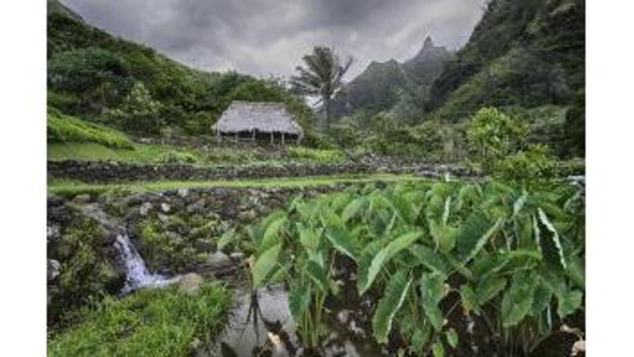 Collection of scientific publications largest by Native Hawaiians