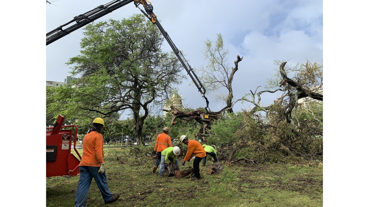 City starts removal of fallen Kiawe trees at Kapiolani Park from last week's storm