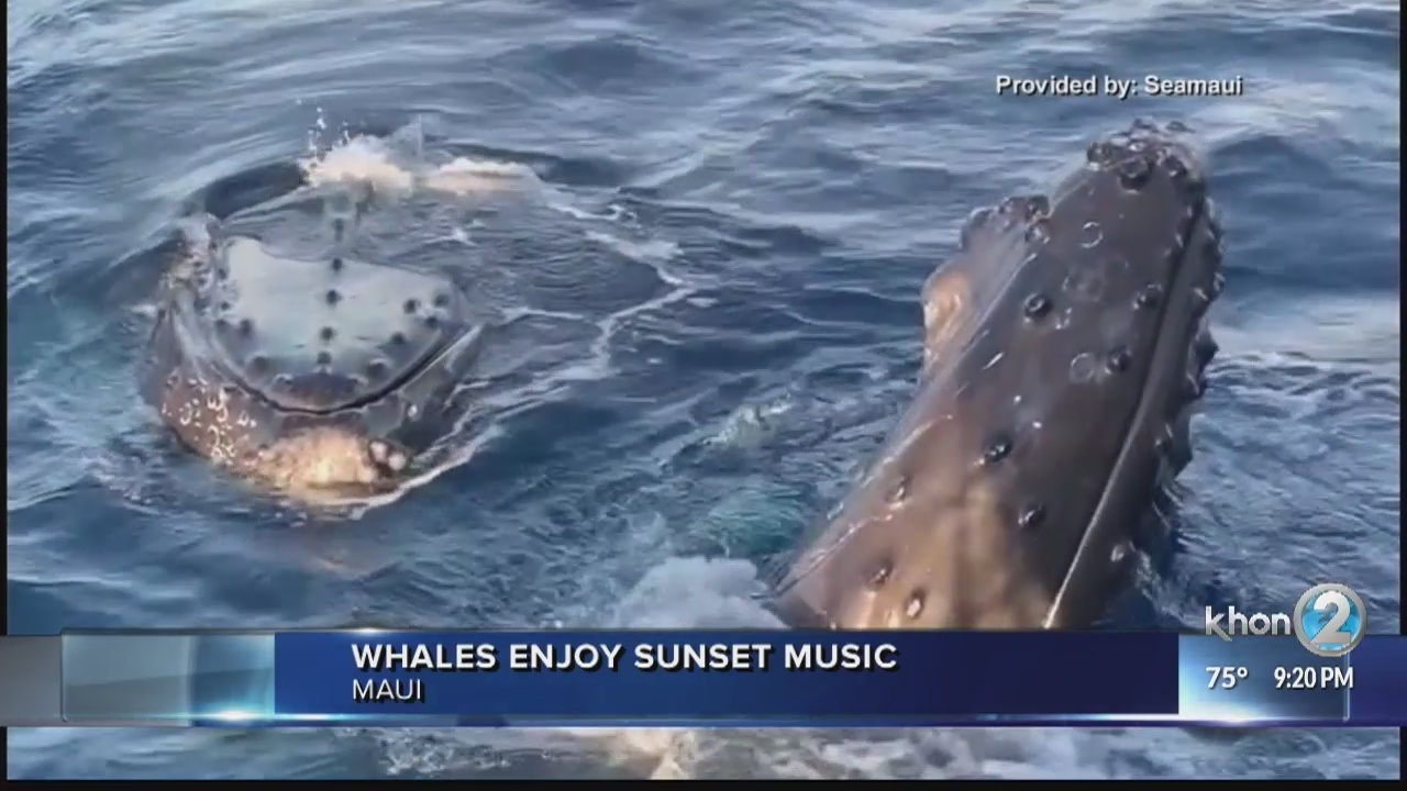Sunsets best enjoyed with humpback whales