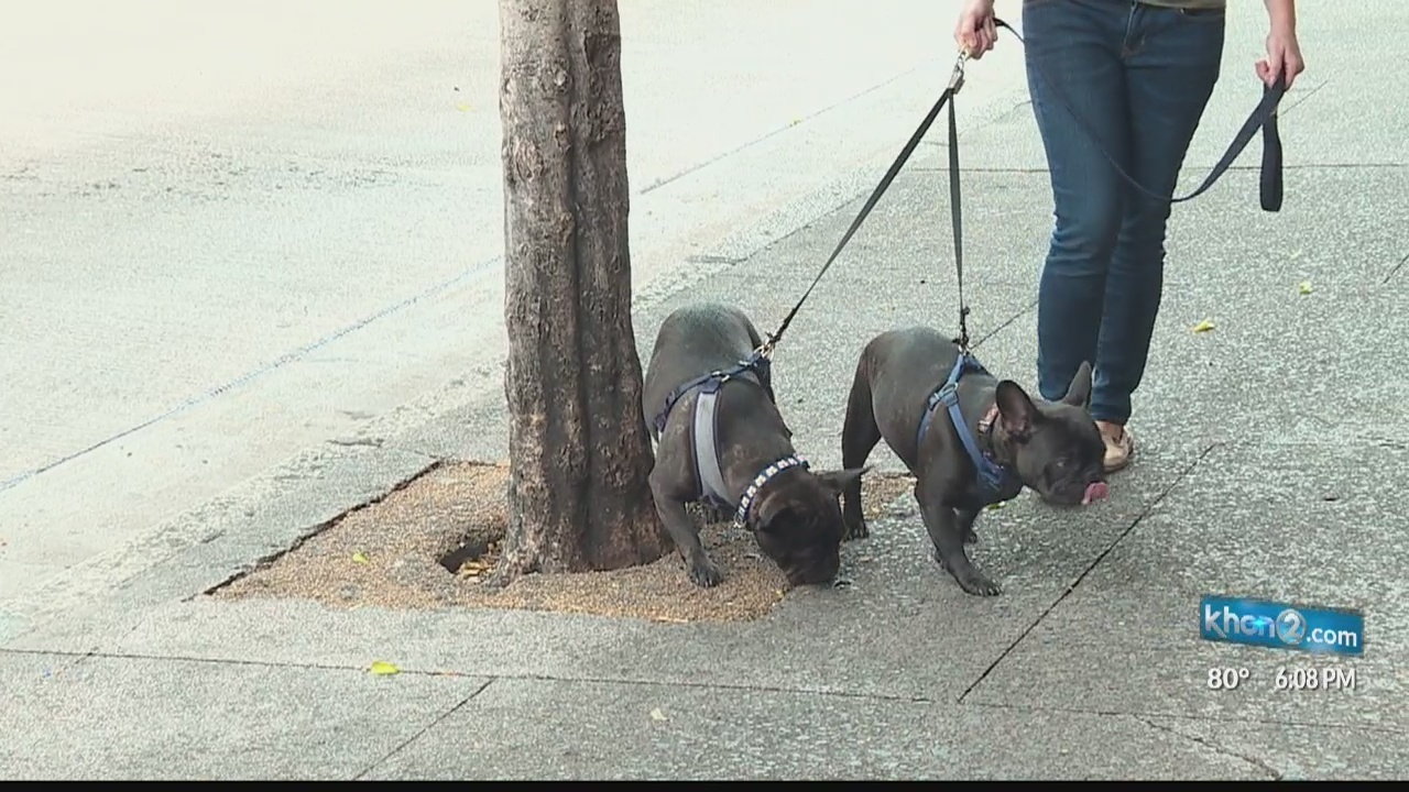 Dog owners should be on the lookout for 'street snacks'