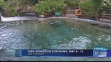 4pm News link: Moms get in free at Sea Life Park with paying guest May 6-12
